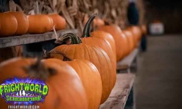 pumpkin-park-pumpkins